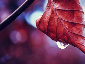 秋天早安心语正能量一句话朋友圈问候语