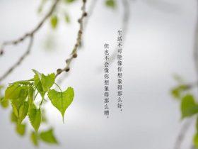 见字入面王耀庆《我们能还上那3000美金的房租》